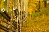 Blacksås (netzanette) Tags: autumn fall 50mm nikon sweden bokeh vall hälsingland d80 fäbod nikond80 gärdesgård fäbodvall blacksås blacksåsvallen