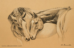 'Best of Friends' (Ali Bannister) Tags: friends horse amigos art love paper print caballo cheval sketch arte friendship pareja drawing joey amor pastel kunst pair paar os dessin amour trust bond amizade papel amis dibujo papier cavallo cavalo pferd amicizia amore freunde freundschaft carta amistad liebe desenho disegno par amiti coppia pastell croquis zeichnung ingres paire skizze legame stampa schizzo vertrauen warhorse impresin pastello estampe confianza bindung fiducia confiance gliamici alibannister kriegpferd chevaldeguerre