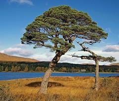 AUTUMN WALTZ (kenny barker) Tags: scotland explore lochtulla bridgeoforchy olympusep1 panasonic20mmf17asphlens kennybarker
