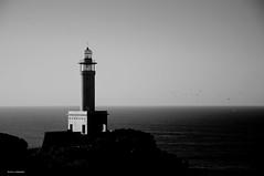 las gaviotas de Punta Nariga (Rafa Lorenzo) Tags: galicia malpica costadamorte puntanariga