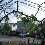 "Teenage Mutant Ninja Turtles @ Christopher Mello's Garden <a style=""margin-left:10px; font-size:0.8em;"" href=""http://www.flickr.com/photos/14315427@N00/11919580844/"" target=""_blank"">@flickr</a>"