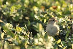 (minna-L) Tags: winter france sunshine birds animals canon 60d notredamebirds