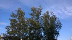 Photo taken with Nokia Lumia 1020