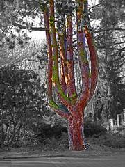 Multistamm-Baum (KL57Foto) Tags: pen germany deutschland am natur olympus nrw rhein bume baum rheinland rhineland monheim ep1 monheimamrhein stadtmonheim kl57foto stadtmonheimamrhein