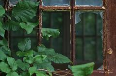 Invasion of the Vines (Gilda Axelrod Photography) Tags: newyork abandoned vines longisland kingspark brokenwindows kingsparkpsychiatriccenter nissequogueriverstatepark