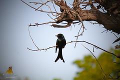 Bird with beauty