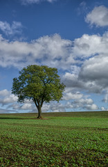 The lonely oak 5 (grbush) Tags: tree field clouds rural countryside oak g3 lonetree lumixg
