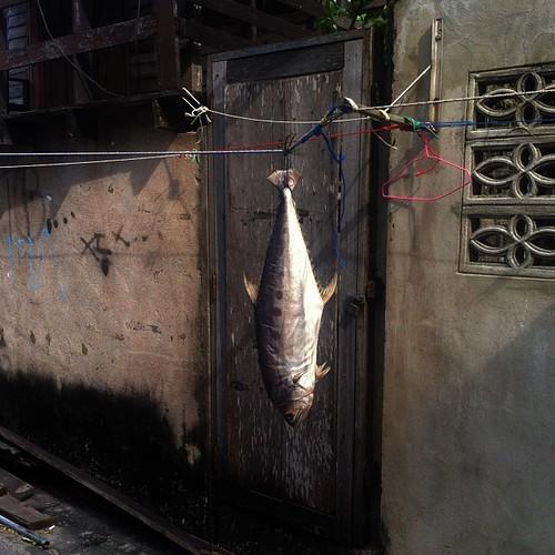 Peixe secando. Hua Hin.