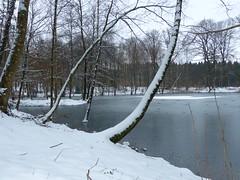 La neige dans la forêt de La Croix aux Bois 01.2015 (ardoise08) Tags: ardennes neige forêt argonne lalinette lacroixauxbois etangdelalinette forêtdelacroixauxbois