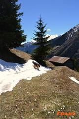 Sulla via per Redasco (jibbajambs) Tags: italy mountain alps nikon franz valtellina grosio valgrosina 500px ifttt redasco
