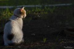 Ca-t-z life II (Marco Makkio) Tags: cat thinking gatto riflettere