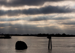 Wintersonne (Strandgutsuche) Tags: hamburg elbe sonnenstrahlen blankenese gegenlicht raysoflight