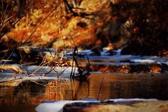 Wilderness (morganyanez) Tags: nature water creek woods nikon warmth d200 wilderness 55200mm