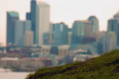 Seattle Turf War.