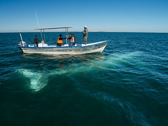 Bajo el agua (bdebaca) Tags: ocean gris mar pacific gray bajacalifornia whale whales pacifico ballena oceano ballenas baleia baleias ballenagris
