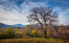 Pear Tree (TalesOfAldebaran) Tags: blue autumn sky orange white mountain tree green fall clouds canon landscape angle hill serbia wide best 1855mm 1855 danilo 18mm srbija cer planina stefanovic stefanović desic 700d t5i talesofaldebaran desić