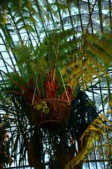 The Palm Greenhouse (larry_antwerp) Tags: brussels belgium belgi brussel  laken royalgarden         koninklijkeserre