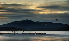 Sunset Jetty 4 (caralan393) Tags: sunset jetty gulls wallaga