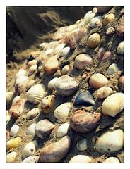 Macro Mondays (objet introuvable) Tags: sea summer macro castle beach nature childhood vacances sand holidays child shell sable panasonic t enfant plage enfance coquillage wheniwasachild macromondays lumixgx8