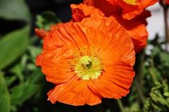 Flower (Hugo von Schreck) Tags: flower macro blume makro givemefive onlythebestofnature tamron28300mmf3563divcpzda010 canoneos5dsr hugovonschreck