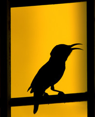 Sunbird Silhouette (sharad.bapat) Tags: sunset sun black window nature beautiful birds silhouette yellow purple grill frame hyderabad animalplanet sunbird natgeo purplesunbird birdsofindia