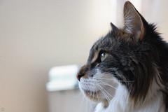 20160522-D7-DS7_1907.jpg (d3_plus) Tags: cats animal japan cat nikon bokeh daily  28105mmf3545d nikkor  kanagawa dailyphoto  thesedays  28105 28105mm  zoomlense     28105mmf3545 d700 281053545 nikond700 aiafzoomnikkor28105mmf3545d 28105mmf3545af aiafnikkor28105mmf3545d