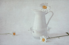 June chamomile (Button-NK) Tags: chamomile june flowers summer pitcher stilllife white yellow crockery