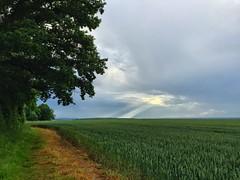 Sunbeams (Marc Sayce) Tags: wheat english countryside hampshire alresford ropley marks four fields sunbeams