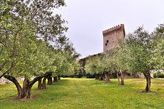The fortress in the olive grove (Riccardo.it) Tags: trees verde green grass alberi outdoor erba middle fortress ages rocca paesaggio umbria ulivi medioevo ladscape