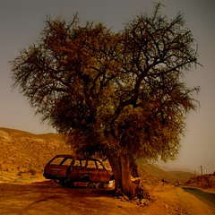 Dead End (Marie.L.Manzor) Tags: road sun tree nature wow landscape nikon desert nikkor brilliant marielmanzor