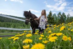 Tahko Kids hevosen taluttajalapsi (VisitLakeland) Tags: summer horse kids finland children child pony hevonen kes poni tahko lapset lapsi