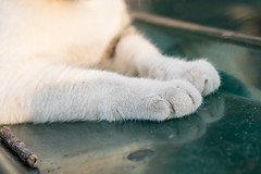 P4085746 (daisuke1230) Tags: cat olympus neko em  m43