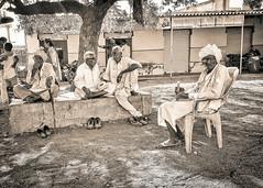 Gram Panchayat (vishalmaru) Tags: gujrat gujarat india jamnagar sika sikka gujrati village life rural ruralindia temple