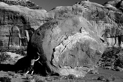 On the rhode (138photography) Tags: rhode trip grandcanyon monumentvalley skateboarding utah arizona texas jumping desert lizard