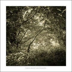 . (shaun.argent) Tags: flowers trees light summer tree texture nature leaves woodland landscapes woods flora seasons wildflower shaunargent