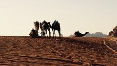 Camellos (PhotoSebastian) Tags: wadirum jordan jordania desert desierto camellos camel