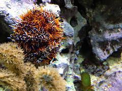 ZooWuppertal_BotanischerGartenRUB 2016_25 (spookybine) Tags: zoo wuppertal animals tiere nature natur underwater unterwasserwelt sea water fish