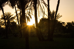 Golden rays (cpt_ahmed93) Tags: sunset aswan nature