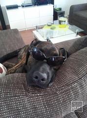 Miami Vice (MyArt Fotografie by M.Raschke) Tags: dogs animals tiere hund