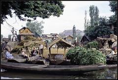 Kashmiri Farm Family (ioensis) Tags: family india june boat farm 1984 srinagar kashmiri jdl ioensis india282b1bjohnlangholz2016