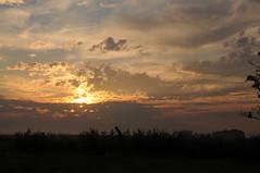 Früh am Morgen in Bergenhusen, Stapelholm (20) (Chironius) Tags: stapelholm bergenhusen schleswigholstein deutschland germany allemagne alemania germania германия niemcy morgendämmerung sonnenaufgang morgengrauen утро morgen morning dawn sunrise matin aube mattina alba ochtend dageraad zonsopgang рассвет восходсолнца amanecer morgens dämmerung wolken clouds wolke nube nuvole sky nuage облака himmel ciel cielo hemel небо gökyüzü gegenlicht
