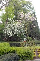 DSCN2050 (Rumskedi) Tags: flore monde europe belgique ndda lilas aubpine ndda12052016