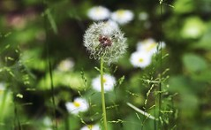 Parc De Biez - Mondeville (CyndiieDel) Tags: france macro nature normandie extrieur parc calvados mondeville bassenormandie parcdebiez