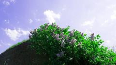 FA_004 (Dutch_Chewbacca) Tags: nature netherlands spring fort sunny dijk brabant 1877 landschap 1880 waterlinie nieuwe 1847 altena brabants hollandse uppel gantel uppelse schanswiel