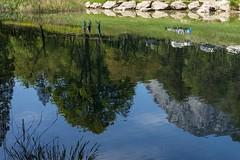 valle dei laghi 160508_121 (gmcvrphoto) Tags: alberi lago corso lamar acqua riflessi montagna calma paesaggio trentino collina bosco dacqua allaperto versante
