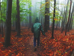 (Botond Pataki) Tags: road autumn trees light shadow red man motion blur green fall colors leaves contrast forest walking landscape person tour hiking coat fast running human raincoat