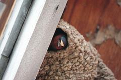 Peaking Bird (Alex E. Proimos) Tags: park bird nest peak grand national teton peaking