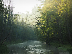 Morning Mists (Saga) Tags: wood morning mist forest sunrise river yna