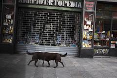 (Giovanni Stimolo) Tags: street city dog brown reflection strange animal shop reflections mirror fuji legs streetphotography queue ironic signboard streetreportage x100s fujifilmfinepixx100s urbanreportage