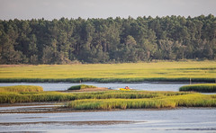 Fishing as the Tide Recedes (Gabriel FW Koch) Tags: people marsh grass reeds kayaks telephoto sun sunlight fishing mud canon nature natural fish eos dof bokeh sigma 600mm inletmarsh trees forest